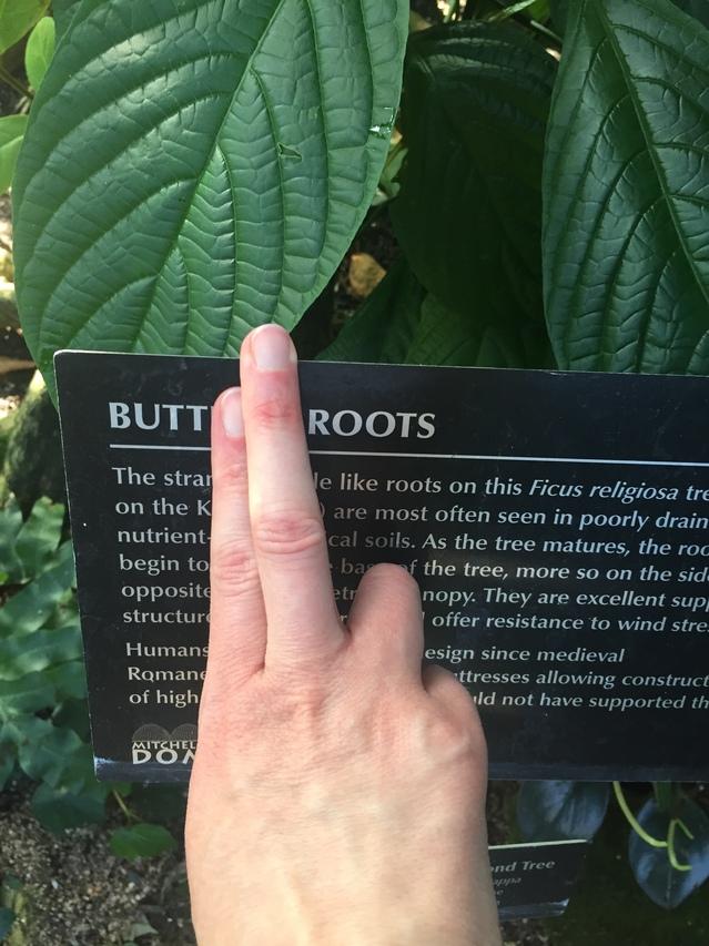 Butt Roots